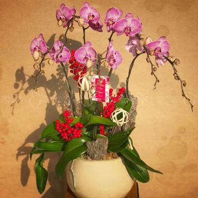 Khai xuân - D583146 - xinhtuoi.online