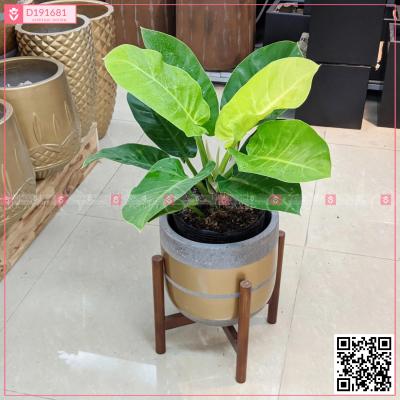 Chậu Xi Măng Fiber Họa Tiết Trồng Đế Vương Xanh - D191681 - xinhtuoi.online