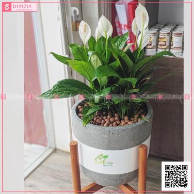 Chậu Xi Măng Fiber Trứng Họa Tiết Lan Ý - xinhtuoi.online