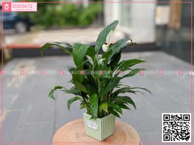 Xinh Xắn - D203672 - xinhtuoi.online