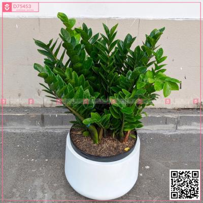 Kim Tiền Phúc Lộc - D75453 - xinhtuoi.online