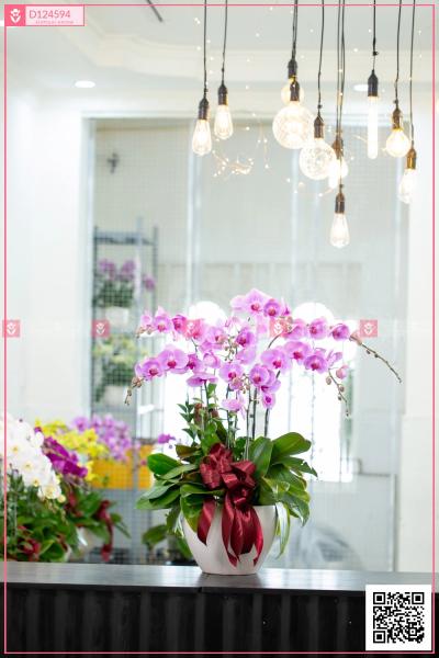 Đại lộc - D124594 - xinhtuoi.online
