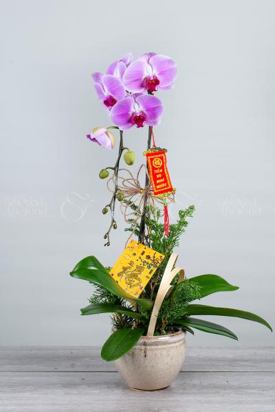An khang thịnh vượng - xinhtuoi.online
