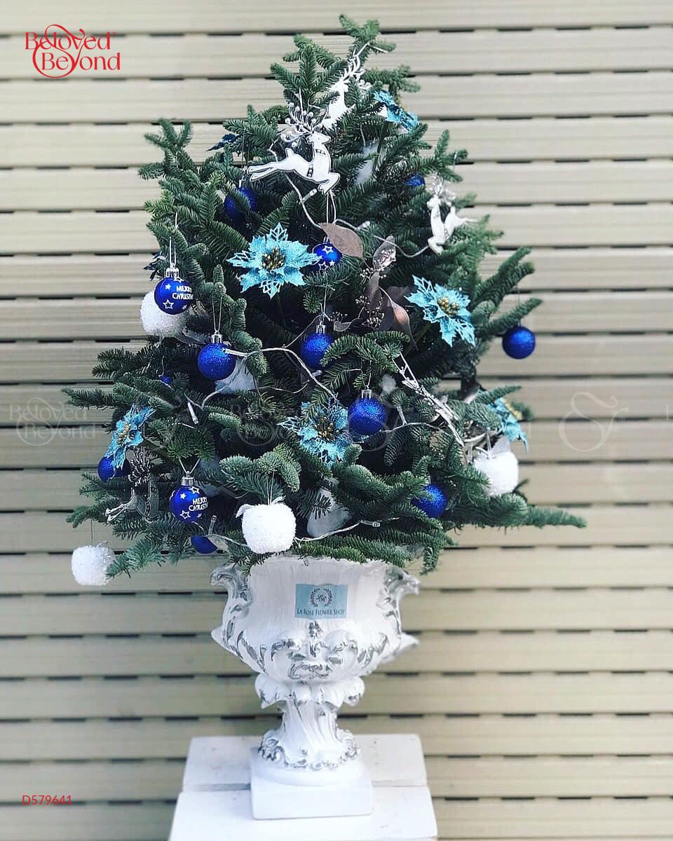Mùa Noel - D579641 - xinhtuoi.online