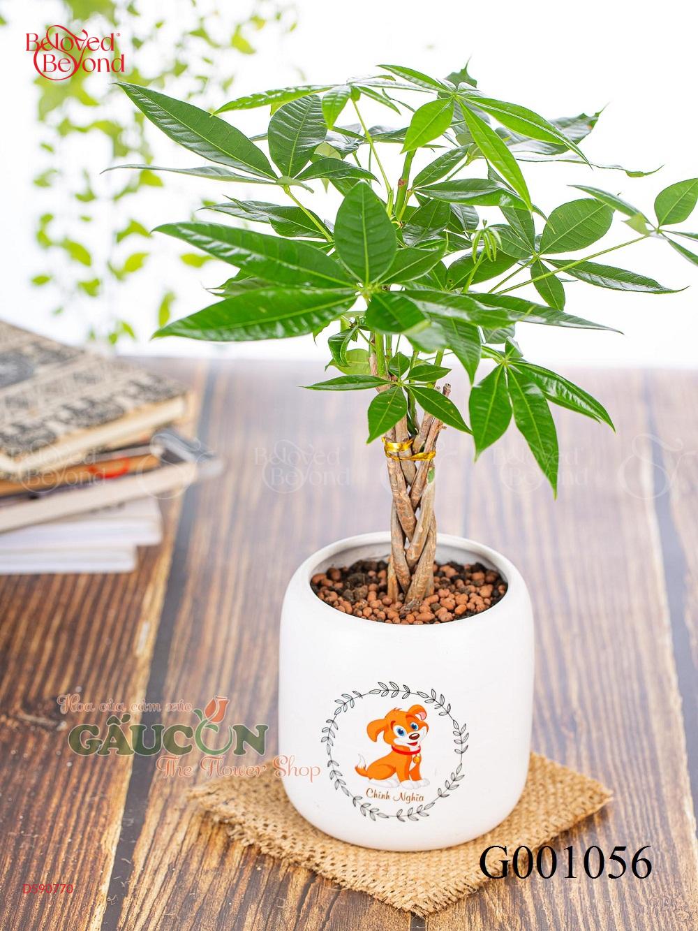 Kim Ngân - xinhtuoi.online