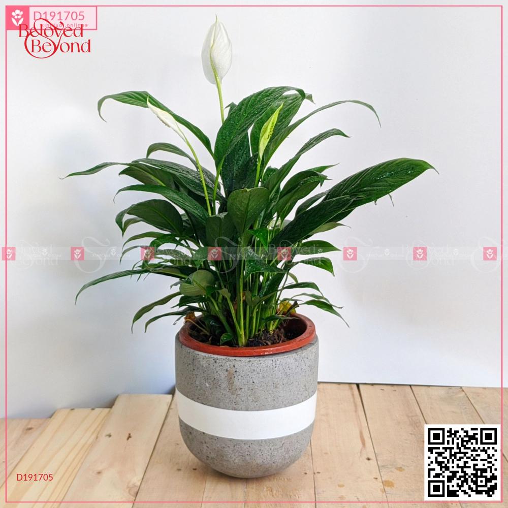 Chậu Xi Măng Fiber Trứng Họa Tiết Lan Ý - D191705 - xinhtuoi.online