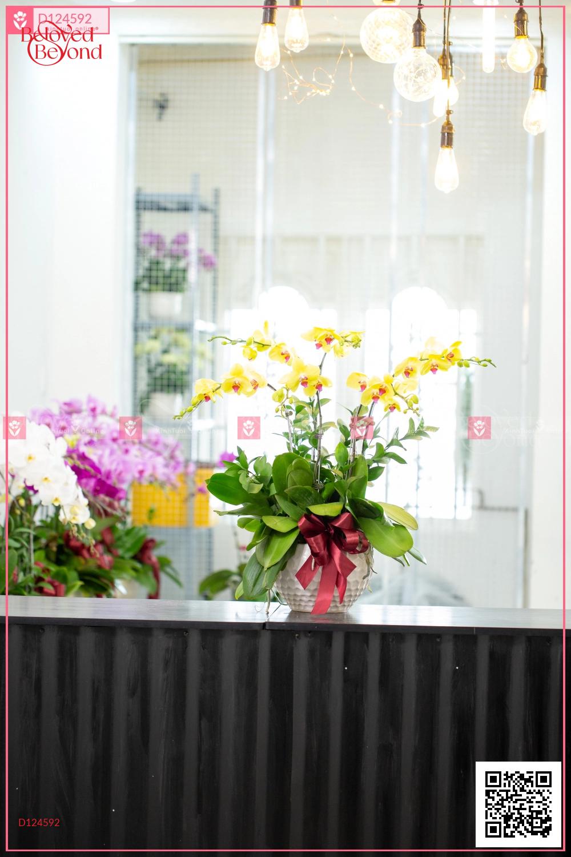 Xuân như ý - D124592 - xinhtuoi.online