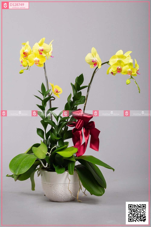 Phát Tài (02 Cành) - D128749 - xinhtuoi.online